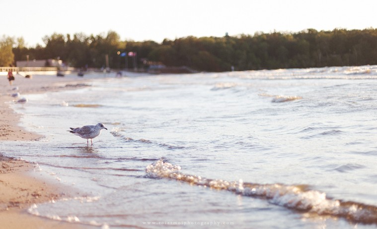 Seagull at Grand Beach Manitoba Lifestyle Photography by Calgary Photographer